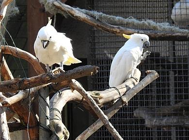 Halberstadt Tierpark