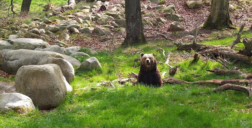 Tierpark Hexentanzplatz - Bärengehege
