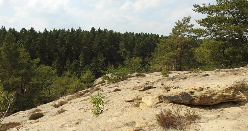 Burg Regenstein - Plateau des Papenberges
